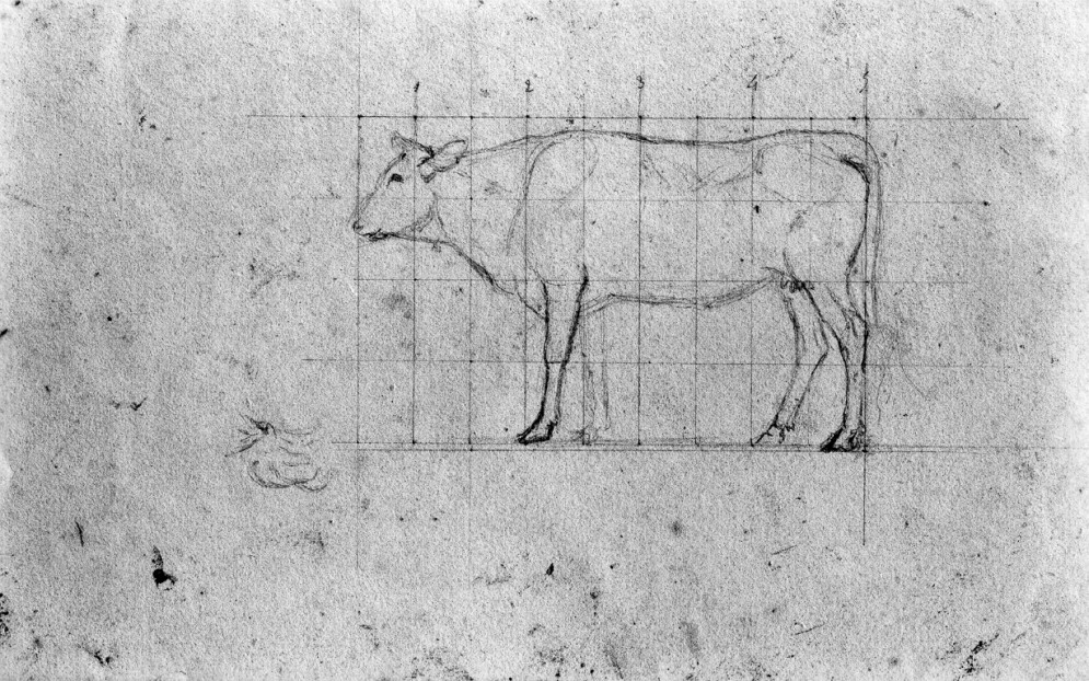 Sketch of a Cow