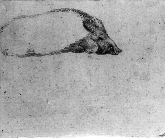 Study of a Sleeping Boar