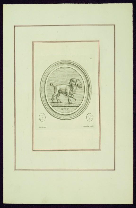 Portrait of Madame de Pompadour's Dog (Bébé?), from Madame de Pompadour's