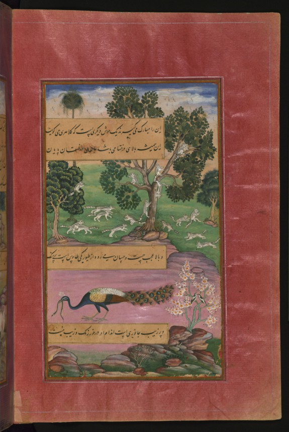 Animals and Birds of Hindustan: Squirrels and Peacock, from the Baburnama (Book of Babur)