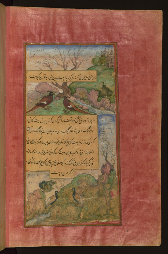 Birds of Hindustan: Luchas, Called Buqalamun, and Partridges