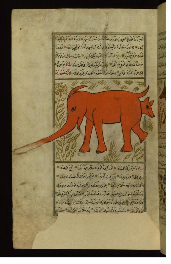 An Elephant-like Animal