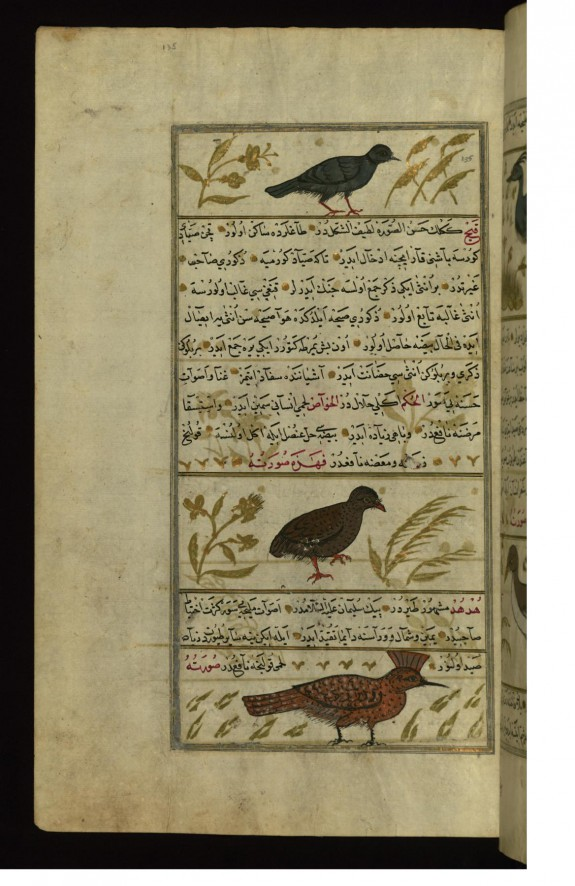 A Ring-dove, a Partridge, and a Hoopoe