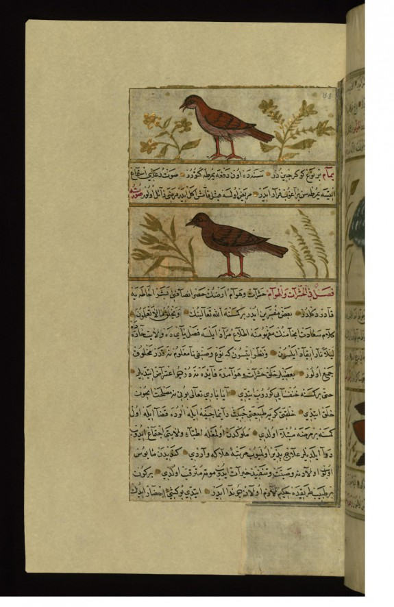 A Bird Called Yura'ah (?) and a Turtle-dove