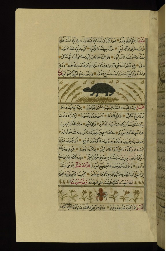A Hedgehog and An Insect Called Mahl
