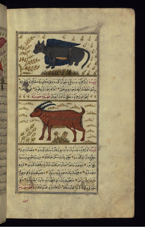 A Winged Animal of Dhabikh Island and a Red Animal of Vaynah (Vinah?) (Sea of China)