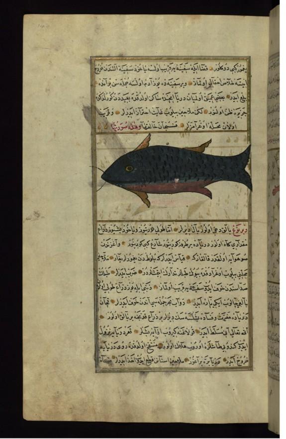 A Fish from the Vaynah (Vinah?) Seas