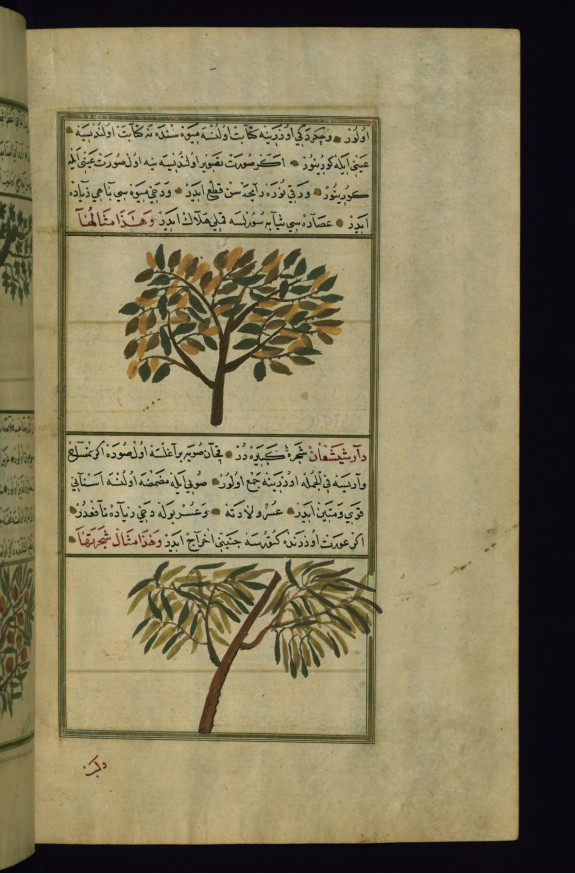 A Peach Tree and a Tree Called Dar Shish'a