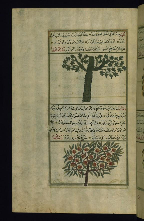 A Plane Tree and a Pomegranate Tree