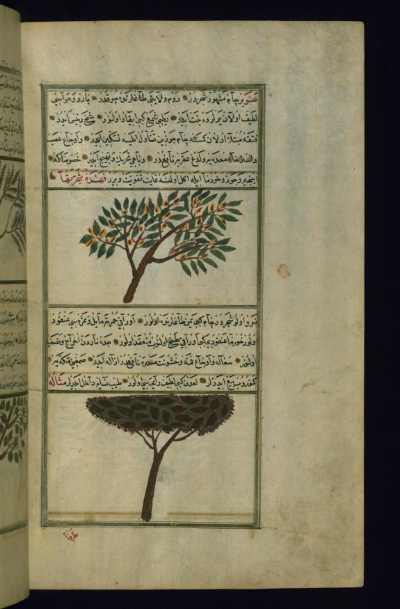 A Pine Tree and a Terebinth Tree