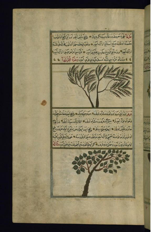 A Tamarisk Tree and a Juniper Tree