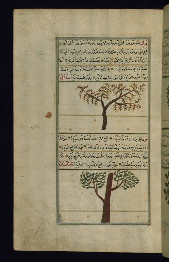 A Jujube Tree and an Aloeswood Tree