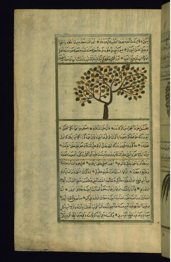 A Lotus Tree