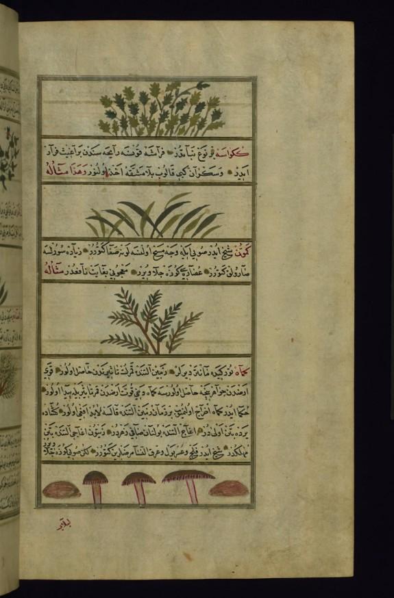 Coriander, a Plant Called Kakrasah (?), Cumin, and Mushrooms