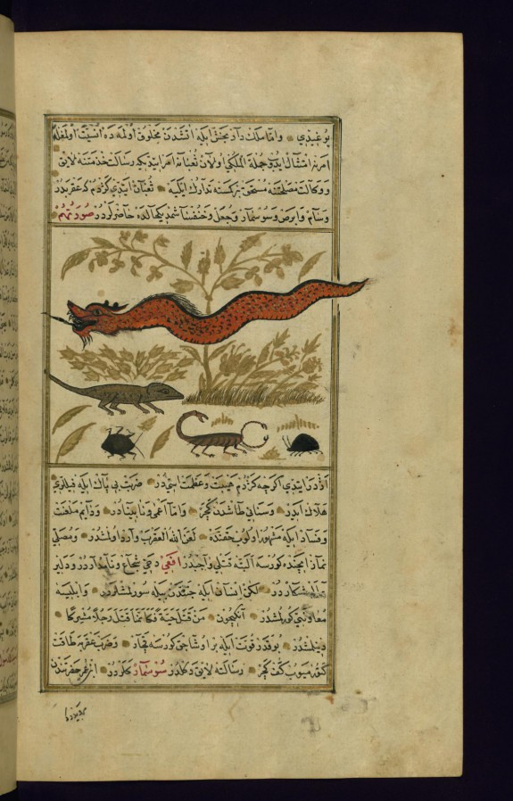 A Dragon, a Lizard, and Other Animals