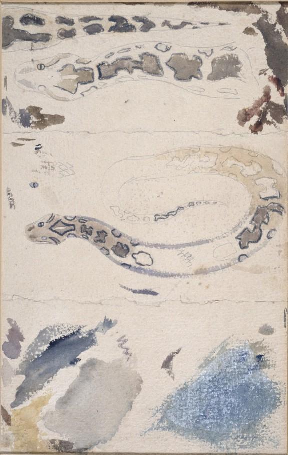 Studies of a Snake's Skin