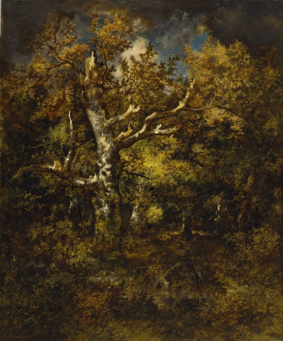 Forest of Fontainebleau, Autumn