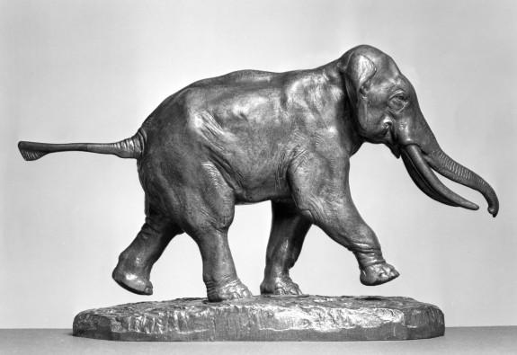 Elephant of Cochin-China