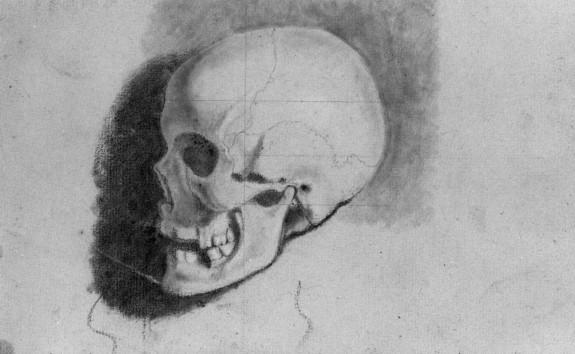 Academic Study of a Skull