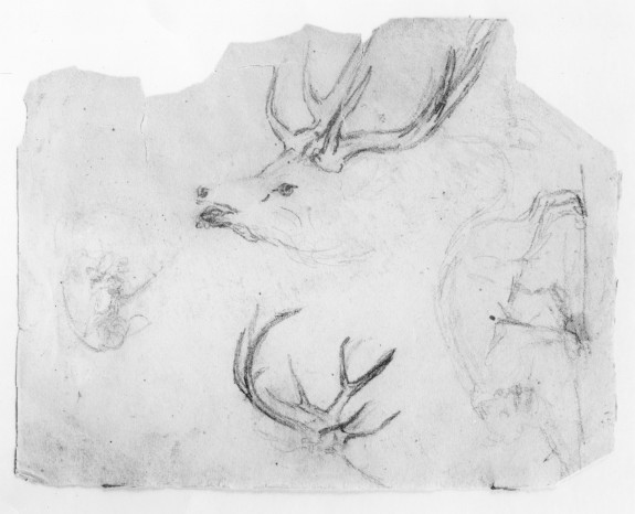 Sketches of Stags' Heads and Antlers, Prowling Panther, and Animal Combat