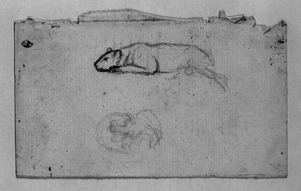 Sketch of a Tiger Rolling on Its Back