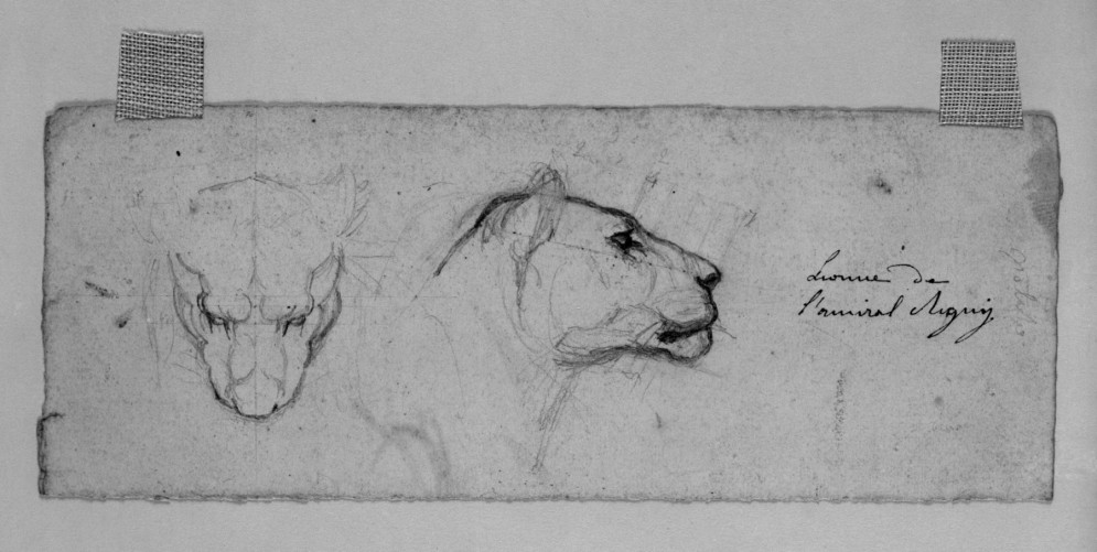 Sketches of Head of Lioness