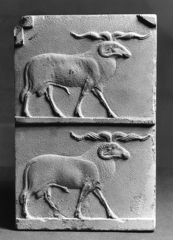 Model with Two Rams