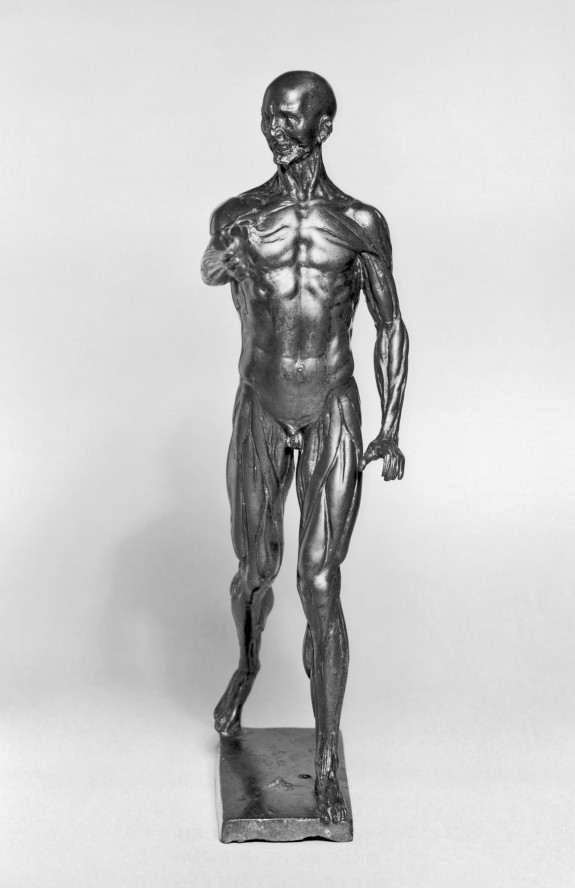 Anatomical Figure of a Man