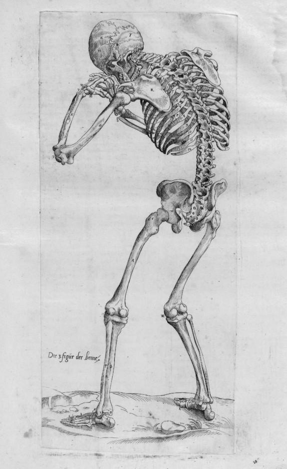 Anatomia Deudsch