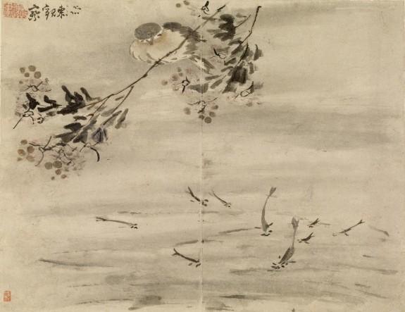Bird Watching Fish