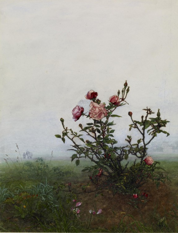 The Rosebush