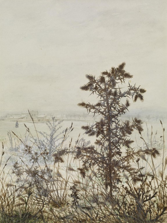Thistles and Weeds