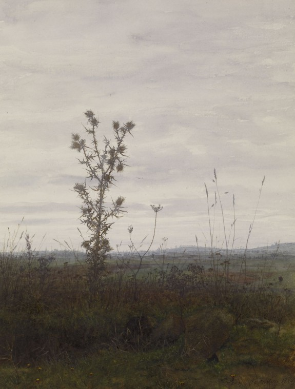 Landscape with Thistle and Weeds