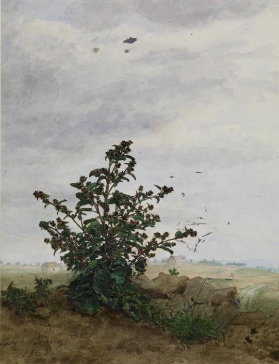 Thistle Bush with Farm