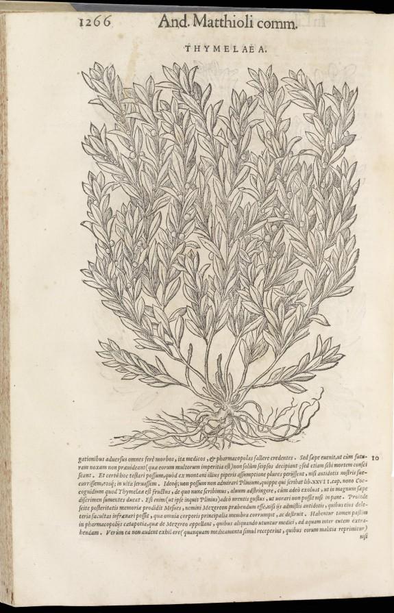 Commentarii in Sex Libros Pedacii Dioscoridis Anazarbei de Medica Materia, jam Denuo ab Ipso Autore Recogniti, et Locis Plus Mille Aucti. Vol. II
