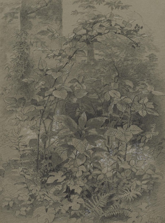 Woodland Plants