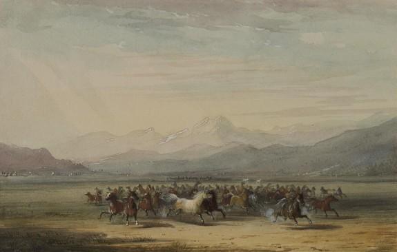 Stampede of Wild Horses