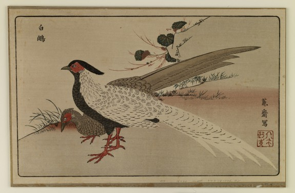 Reproduction: Pair of White Pheasants