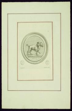 """Portrait of Madame de Pompadour's Dog (Bébé?), from Madame de Pompadour's """"Suite of Prints"""""""