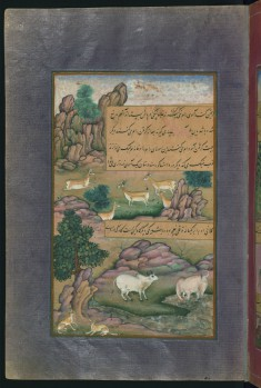 Animals of Hindustan: Small Deer and Cows Called Gini