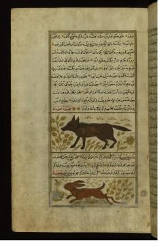 A Hyena and a Lynx