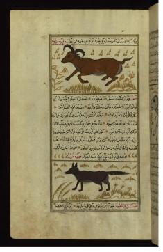 An Animal Called Namur and a Marten (Sable)
