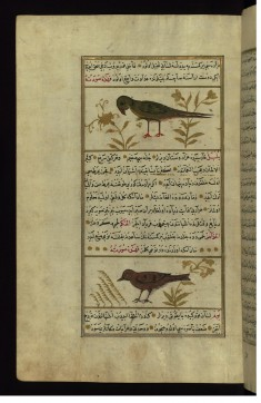 A Parrot and a Nightingale