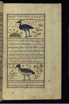 A Crane and a Heron (?)