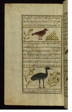 An Indian Bird Called Quqis and a Crane