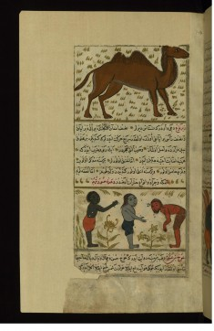 A Camel and Three Strange Single-handed and Single-legged Creatures