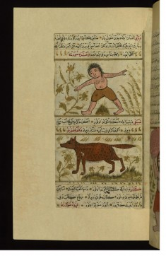 The Creatures Dabbabi (Half-man, Half-bear) and Dabaghi (Half-wolf, Half-hyena)