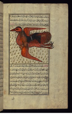 A Huge Bird Carries a Man on its Back