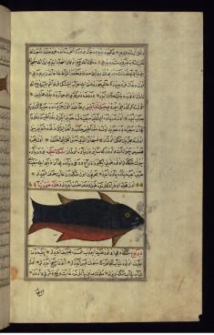 A Huge Fish