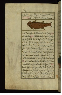A Fish with the Head of an Owl